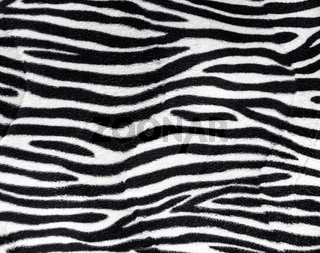 Zebra fur background texture