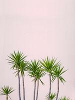 Hawaii Hotel Tropical Plants