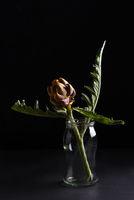 A small dried artichoke against a black background