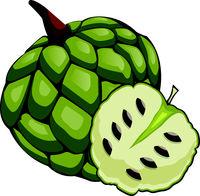 Green cherimoya cut in half cartoon fruit vector illustration on white background.