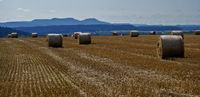 straw bales on harvested grain field