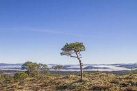 fjell landscape in Trondelag