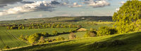 England - Chiltern Downs