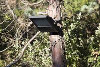 lamp at tree