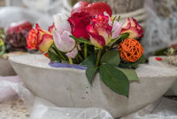 creative rose decoration in concrete shell - close-up of floristry