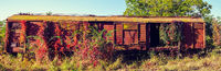 Abandoned freight wagon captured by vegetation