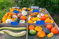 For sale colorful fruits gourds and pumpkins