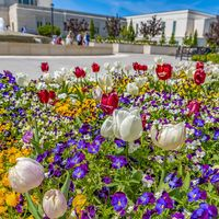 Square frame Array of vibrant flowers blooming under sunlight in spring