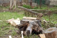 Old axe in tree stump