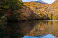 Autumn Fall Lake Japan