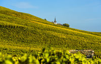 Vineyards in autumn colour in the wine-growing area Fechy Vaud, Switzerland