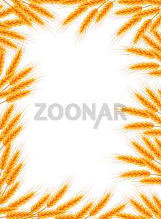 Wheat frame. Spikelets blank template for your design. Vector illustration
