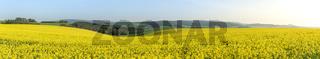 Rape fields at sunrise in Moravia