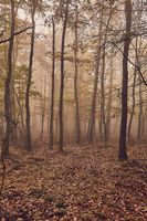 Misty autumn forest fog