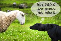 Dog Meets Sheep, Quote First Step Is The Hardest