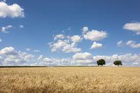 Walnussbaum (juglans regia) und Wolkenhimmel