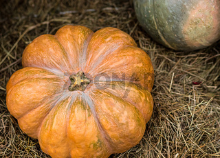 vintage autumn symbol orange pumpkin close-up symmetrical mature orange