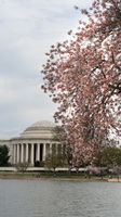 Jefferson Memorial and People Enjoying The Tidal Basin Blossoms