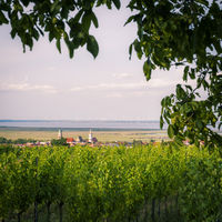 Rust am See with vineyards in Burgenland Austria