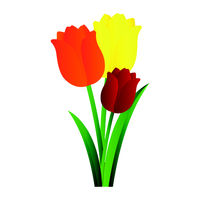 Vector illustration of orange yellow and red tulips with green leafs  on white background.