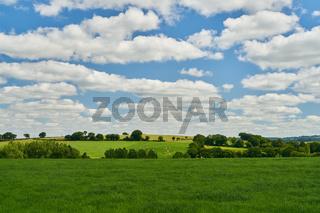 Grüne Wiese mit Kühen vor einem blauen Himmel