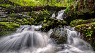 A Small Waterfall in the Rain Forest, Northern California