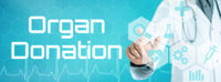 Doctor touching an icon on a futuristic interface - Organ donation