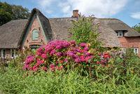 Flowering front yard