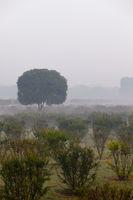Foggy early summer morning
