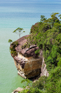 Cliff and trees at ocean shore
