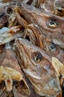 Drying stockfish cod heads in Reine fishing village in Norway