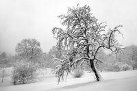 Winter in the citizen park of Hof town
