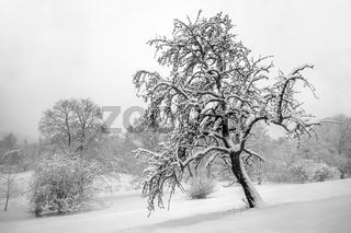 Winter im Bürgerpark der Stadt Hof