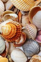 Variety of multicolor seashells