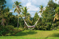 Empty swing over beautiful rice fields with tropical palm trees background