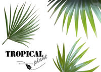 Tropical Palm Leaves Set