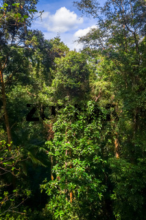 Canopy in jungle, Taman Negara national park, Malaysia