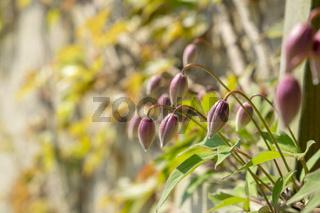 Flowers on Fraueninsel in Chiemsee