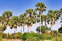 Landscape with plams at Liwonde National Park, Malawi