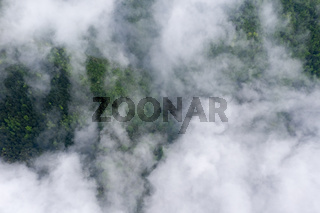 mountain forest and cloud mist