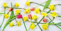 Frühling, Ostern, Narzissen, Osterglocken, Tulpen, Banner, Header, Headline, Panorama, Textraum