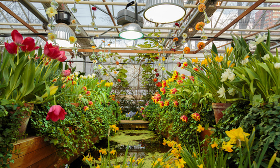 Flowers in green house. Floral bouquet shop. Blooming plants and multi color flowers inside a garden center
