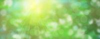 grün abstrakt textur natur banner