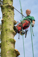 Dutch male tree expert climbing with rope in tree