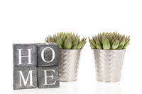 Succulent plants in flower pots at home