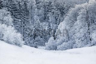 Winterwald Harz