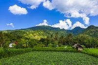 Fields on Bali island Indonesia