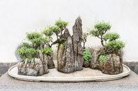 traditional chinese bonsai