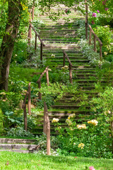 some stairs in the green garden