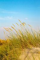 Beach grass on Juist